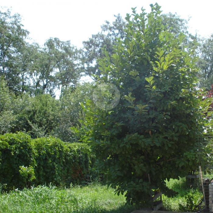Lot teren rezidential Ion Mihalache (1 Mai)
