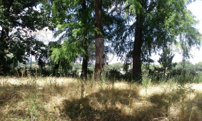 Lot teren rezidential Domnesti