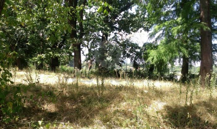 Lot teren rezidential Copaceni