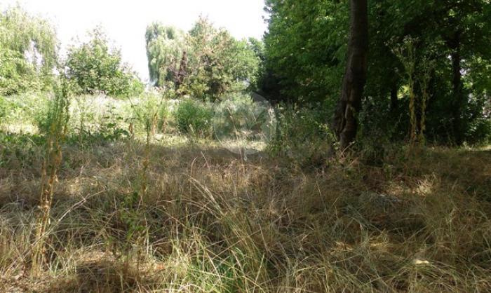 Lot teren rezidential Silistea Snagovului