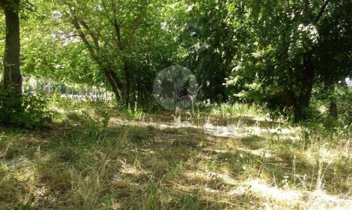 Lot teren rezidential Moara Vlasiei